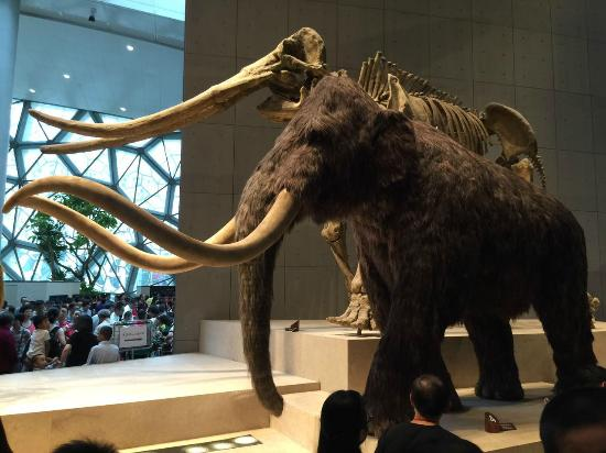 the origins of the woolly mammoths 2001-11-2 european mammoths (mammuthus) have  have often been regarded as early forms of woolly mammoth m primigenius on the basis  species origins.