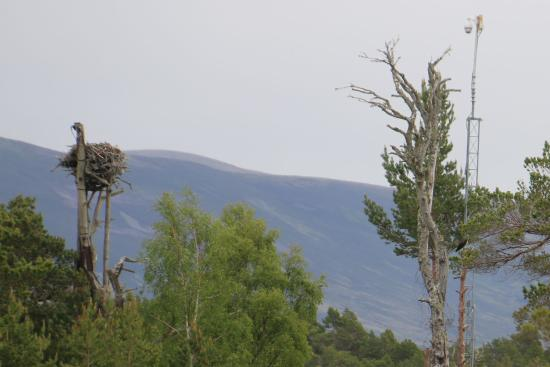 ‪‪Aviemore‬, UK: The nest, camera tower and an Osprey - if you can see it.‬