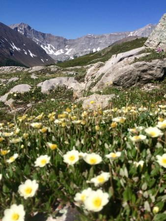 Kananaskis Country, Καναδάς: Mountain avens in the foreground