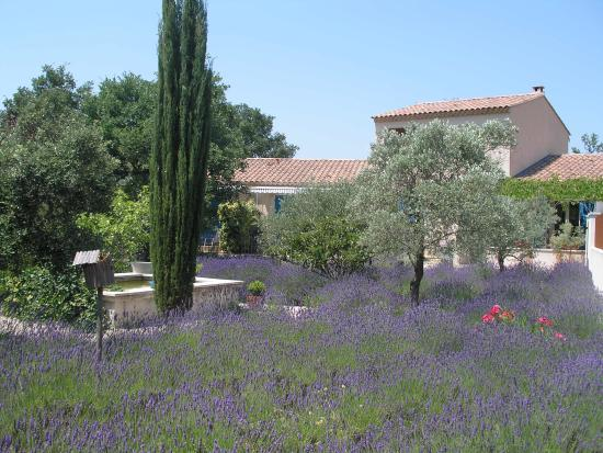 Photo of Le Clos des Lavandes Lacoste