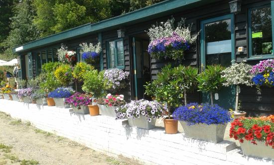 Dunwich, UK: Flower filled front of tea room