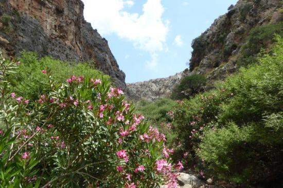 Gorge of the Dead - Oleander - Picture of Gorge of the ...