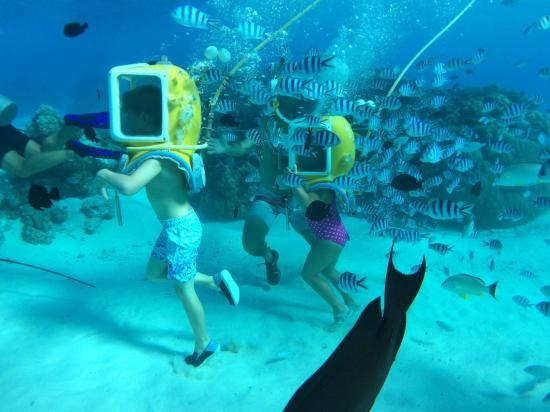 Image Result For Scuba Diving In Bora Bora Awesome Diving In French Polynesia