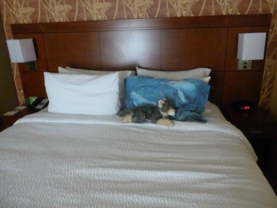 Bed Picture Of Courtyard By Marriott Williamsburg Busch Gardens Area Williamsburg Tripadvisor