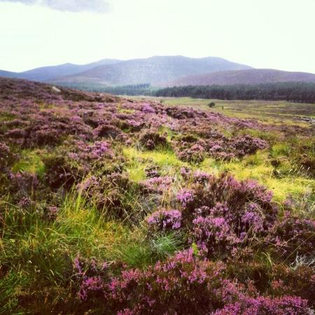 Aviemore and the Cairngorms, UK: walks