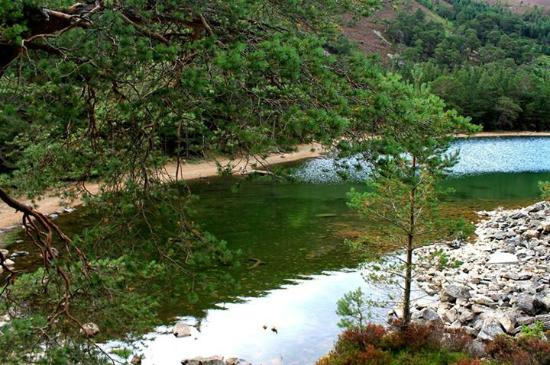 Aviemore and the Cairngorms, UK: Green Lochan