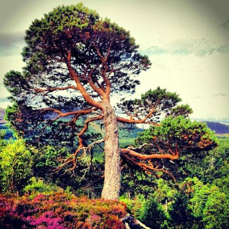 Aviemore and the Cairngorms, UK: walk