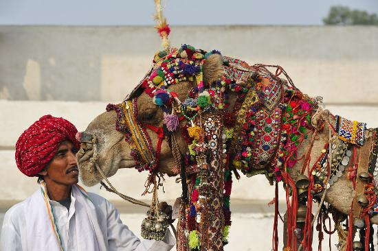 Rajasthan Tour Planner Day Tours