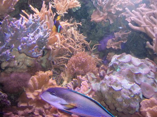 Beautiful coral and fish picture of cleveland metroparks for Cleveland metroparks fishing report