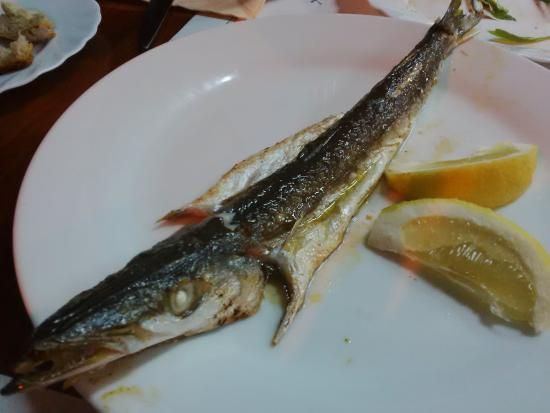 Baby barracuda picture of fish food more pula for Baby koi food