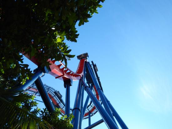 a review of a trip to saint augustine and busch gardens And don't forget that busch gardens is still offering the 2009 fun card for those who want unlimited adventure and family excitement all year long with the fun card, guests pay for a day and enjoy admission to busch gardens for the remainder of 2009.