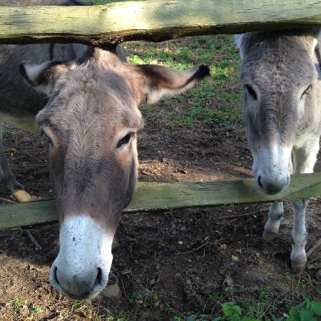 The two donkeys belonging to the owners picture of un matin dans les bois montreuil sur mer - Un matin dans les bois ...
