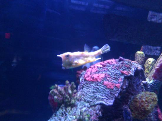 Aquarium Picture Of Sea Life Aquarium Tempe Tripadvisor