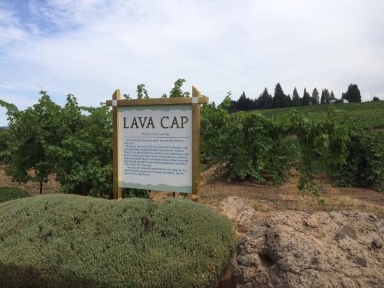 Placerville, Калифорния: Such a beautiful vineyard.