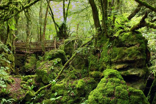 Coleford United Kingdom  City pictures : Puzzlewood Picture of Puzzlewood, Coleford TripAdvisor