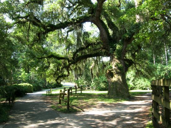 Entrance Area Of Lowcountry Zoo Picture Of Brookgreen