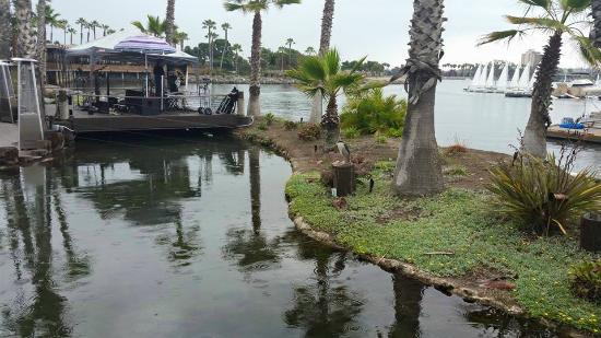 Paradise Point Resort & Spa: grounds