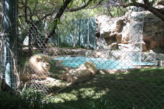 Secret Garden Dolphin Habitat At The Mirage Picture Of Siegfried Roy 39 S Secret Garden And