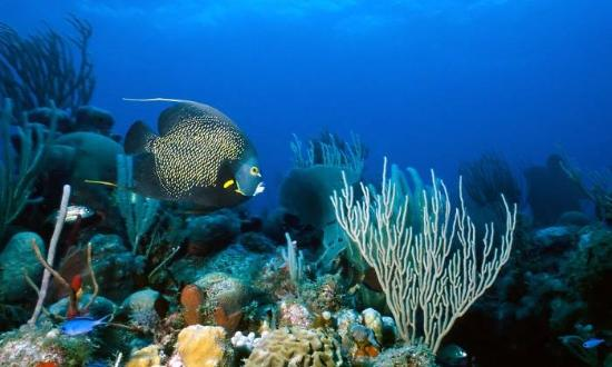 San Ignacio, Belize: Under the sea in Belize.