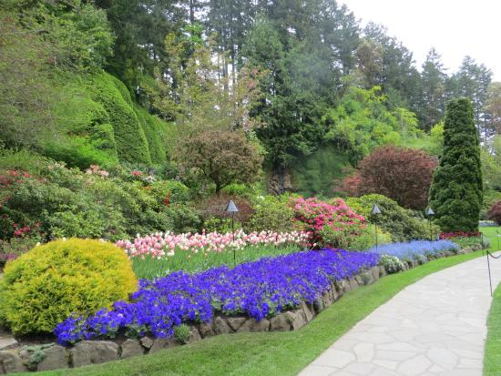 Beautiful Acres Of Tulips Picture Of Butchart Gardens Central Saanich Tripadvisor