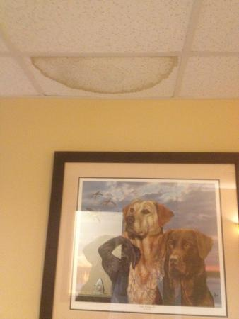 Selah, WA: Water stains on the ceiling.