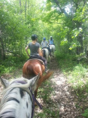 Grey County, Canada: Lovely wooded trails