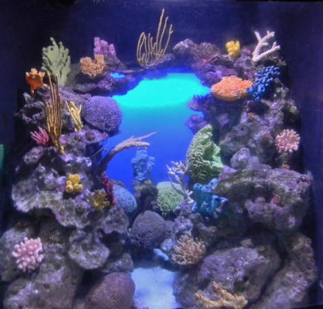 Coral Is So Pretty Picture Of Marine Habitat At Atlantis