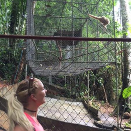 One of the enclosures - Picture of Gibbon Rehabilitation ...