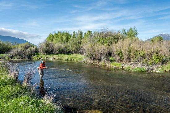 Spring creek fishing picture of montana angler fly for Bozeman mt fly fishing