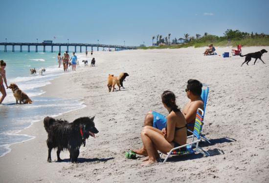 Brohard Paw Park in Venice is a popular dog beach.