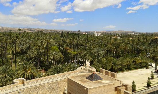 Palmeral desde el Palacio de Altamira - Picture of Palm Groves (Palmeral) of ...