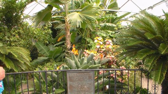 Picture of luthy botanical garden peoria for Indoor botanical gardens