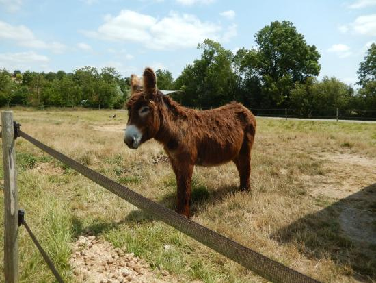 Chaille-les-Marais, France: Donkey at Maison du Maitre de Digues