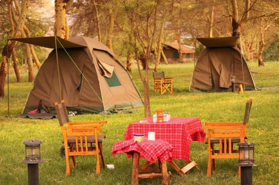 Backpackers Safaris - Day Tours