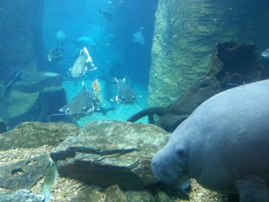 Picture Of Dallas World Aquarium Dallas Tripadvisor