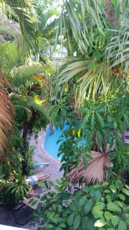 Tropical Inn: View from the deck.
