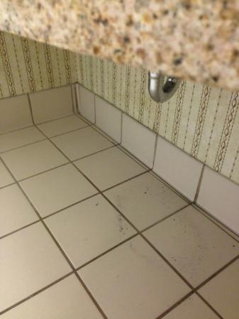 Leaky sink water on floor picture of hilton garden inn for 13305 tampa oaks blvd temple terrace florida 33637