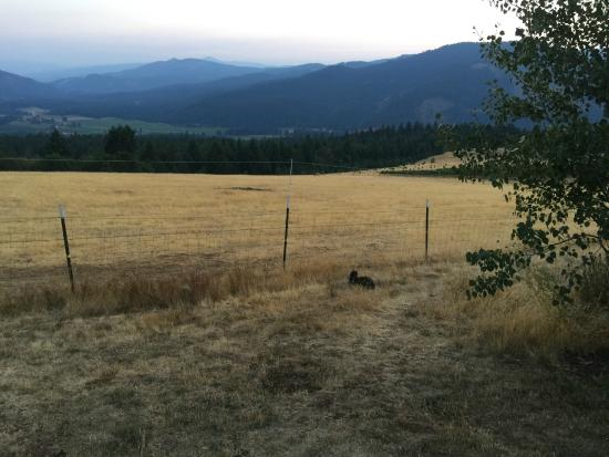 Husum, WA: Cute cat near the field fence. I think this cat is named Epu.