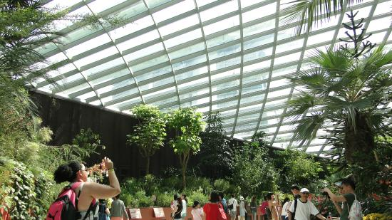 Jardim bot nico de singapura picture of singapore for Au jardin singapore botanic gardens