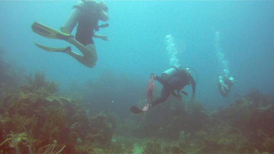 Mamora Bay Divers Antigua Mamora Bay Divers Antigua And