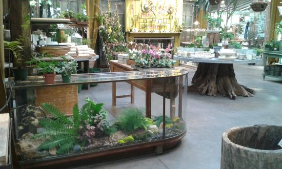 Beautiful Glass Display In The Store Picture Of Terrain