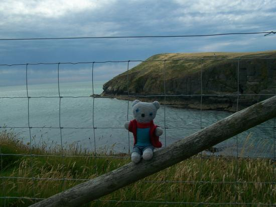 Cardigan, UK: Blue Bear