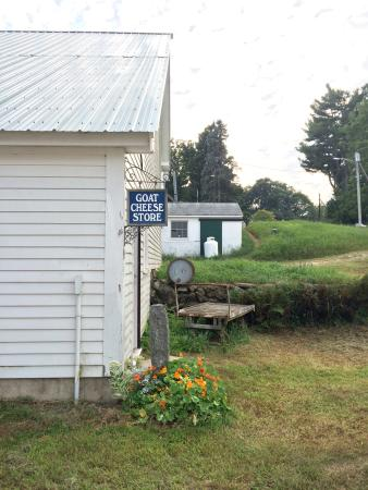 Sterling, MA: Cute farm with delicious cheese and friendly goats!