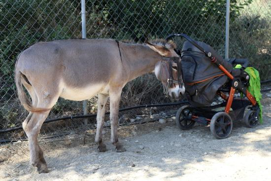 In the shadow - Picture of Corfu Donkey Rescue ...
