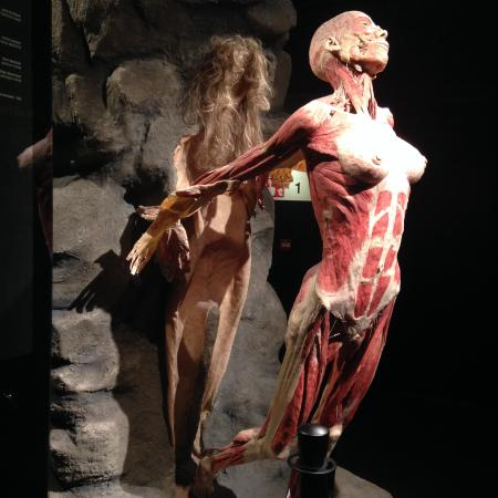augustus 2015   picture of body worlds the happiness