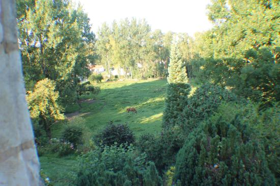Pas-de-Calais, France: View from the window in our room