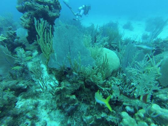 North Wall Picture Of Living The Dream Divers Seven Mile Beach TripAdvisor