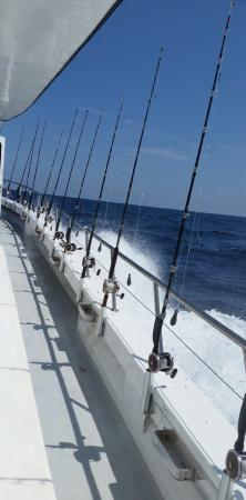 Not a bad day of fishing picture of swoop deep sea for Swoop deep sea fishing
