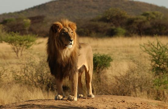 SED Adventures Tours & Safaris - Day Tours