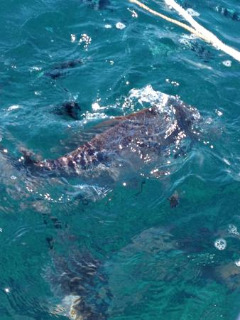 Coral bay photos featured pictures of coral bay western australia tripadvisor - Ningaloo reef dive ...